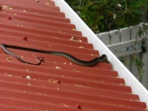 Strong Life Steel Roofing Melbourne – Odd Things Found In Roofs