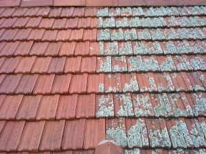 My Roof Is Covered In Moss, Does It Need A Roof Restoration?